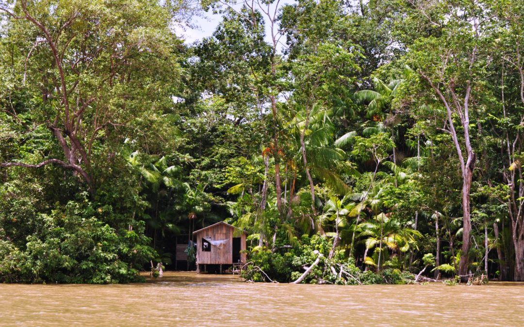 «Querida Amazónia»: Papa evita polémica sobre ordenação sacerdotal de homens casados, pedindo novas formas de liderança e mais missionários