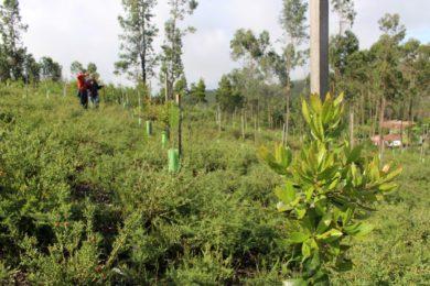 Porto: Apresentação dos resultados do projeto de reflorestação «Futuro» na Universidade Católica
