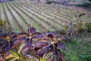 Igreja/Ecologia: Encontro da rede «Cuidar da Casa Comum» sobre «Também somos Terra»