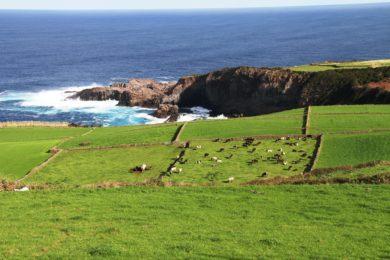 Igreja/Ambiente: Pastoral da Cultura e Universidade dos Açores refletem sobre ecologia