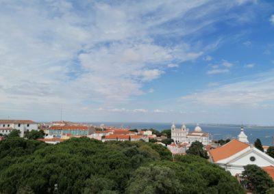 Lisboa Mosteiro Árvore